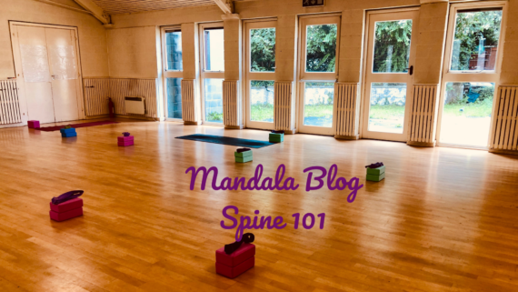 Mandala Yoga Spine Anatomy 101